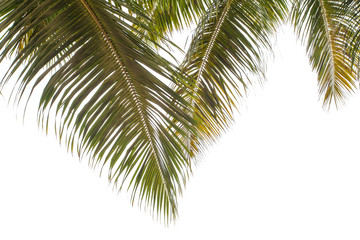 palmes sur fond blanc