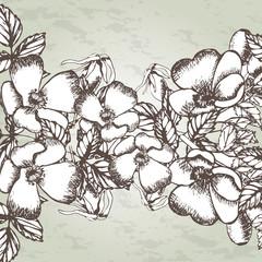 Dogrose. Brier. Eglantine. Hand drawn vintage vector illustration.