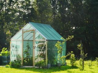 Fototapeta little greenhouse obraz