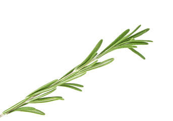 Rosemary isolated on white background, closeup