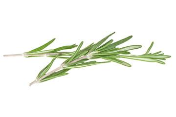Rosemary isolated on white background, closeup