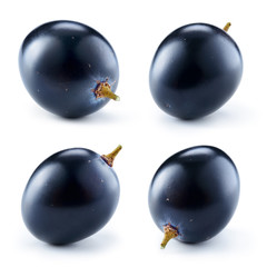 Dark blue grape isolated on white background. One berry. Collect