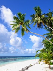 Tropical beach with palm trees, Thinadhoo island, Vaavu atoll, Maldives