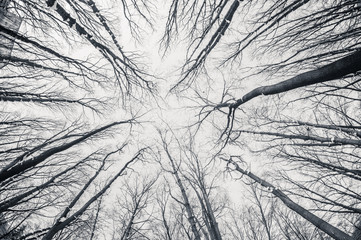 Black and white fisheye d winter trees