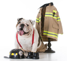 dog dressed like a firefighter
