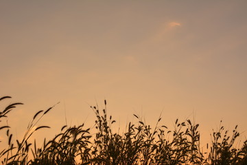 Silhouette of  grass field at the sky sunset