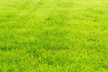 Raindrops on the beautiful green grass.