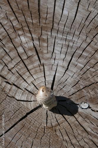 L piote sur un tronc d 39 arbre coup champignon stock photo and royalty free images on fotolia - Champignon sur tronc d arbre ...