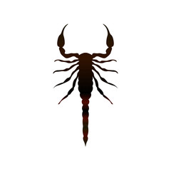 Scorpion vector illustration isolated on a white background