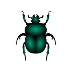 Beetle vector illustration isolated on a white background