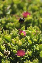 Fotografie di fauna nell'isola della Sardegna, scatti di insetti e farfalle sotto un caldo sole