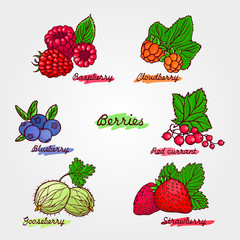 Set of ripe and cute hand drawn berries. Beautiful vector illust