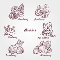 Set of ripe and cute hand drawn berries. Beautiful vector illust