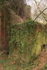 die Natur überwuchert die alten Ruinen