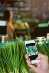 Hand taking a photo of scallions in display in organic section