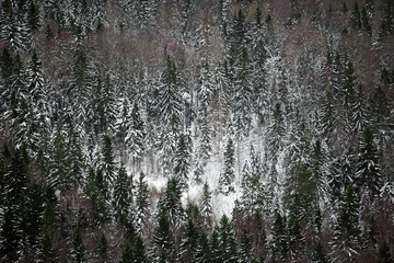 Winter forest. Russia. Tver region.