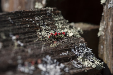 Flower-like Moss on Wooden Fence Angled