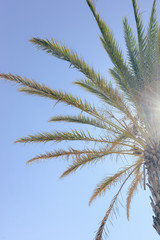 Beautiful palm trees on the sunny sky background