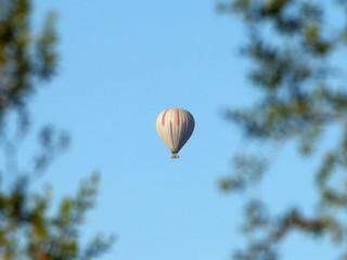 Hot Air Balloon through Tree Limbs