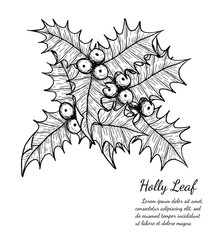 holly plant isolated on brown background.holly leaf sketch by hand drawing.merry christmas