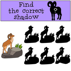 Educational game: Find the correct shadow. Cute beautiful urial