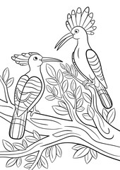 Coloring pages. Two beautiful hoopoes sit on the tree branch.
