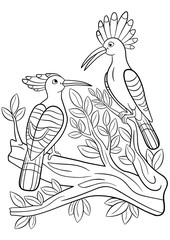 Coloring pages. Two cute beautiful hoopoes smile.