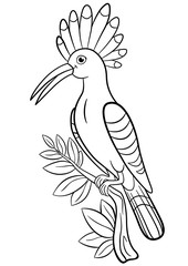 Coloring pages. Cute beautiful hoopoe sits on the tree branch.
