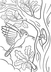 Coloring pages. Mother hoopoe feeds her little cute baby.