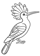 Coloring pages. Cute beautiful hoopoe sits.