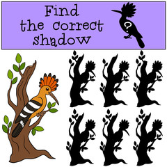 Educational game: Find the correct shadow. Cute beautiful hoopoe