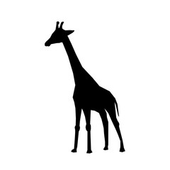 giraffe african animal icon vector illustration graphic design