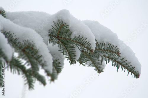 Weihnachtsbilder Tannenzweig.Schneebedeckter Tannenzweig Stockfotos Und Lizenzfreie Bilder Auf