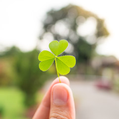 Hand holding green clover leaf on nature background. Rim light. Little warm tone. Square picture. Focus on clover leaf.