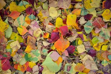 Fallen leaves in Nara, Japan