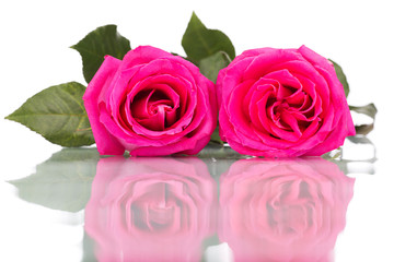 pink rose flower bouquet isolated on white background