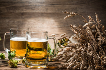 Two mugs of beer next to spikelets on empty background