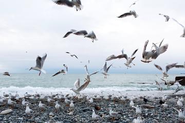 seagulls on the sea
