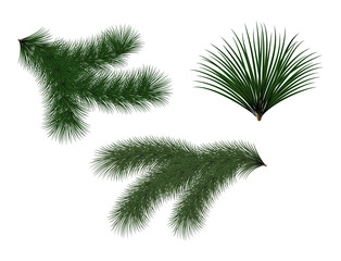 New year green Christmas trees and wreaths