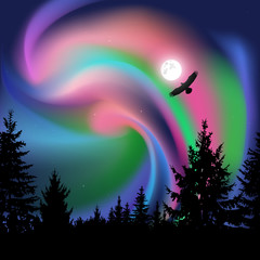 Silhouette of coniferous trees on the background of colorful sky.  Flying eagle. Northern lights.