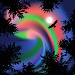 Silhouette of coniferous trees on the background of colorful sky. Flying eagle.  Northern lights.   View from below.