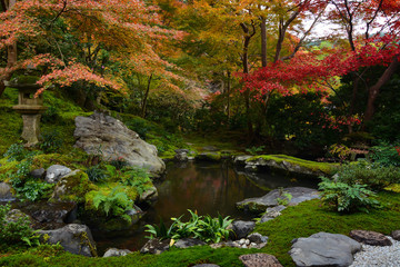 Garden pond in Kyoto, Japan with lush green moss and red fall maple trees