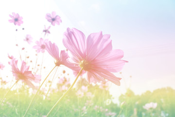 Abstract beautiful colorful cosmos  in pastel color blur background