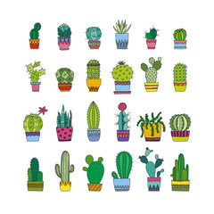 doodle cactus and succulents