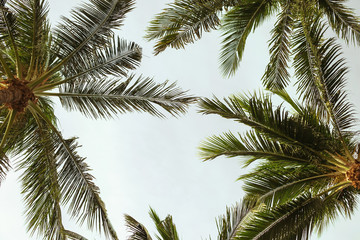 Palm trees leafs on blue sky background, summer tropical vacation