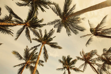 Palm trees in Summer sky on Coconut Island. Summer beach Vacation