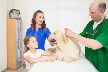 Veterinarian or doctor checking up golden retriever dog at vet clinic.Under exposed photo