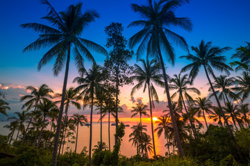 THAILAND, February - 20, 2014. Sunset on the background of the sea and tropical palms