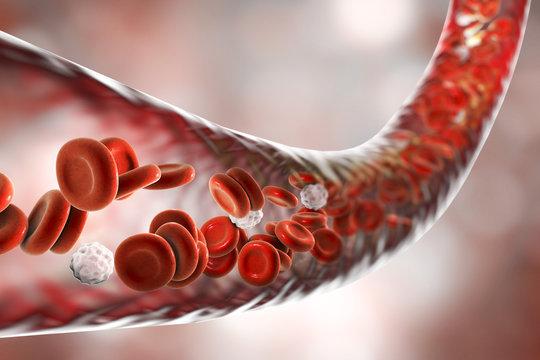 Blood vessel with flowing erythrocytes and leukocytes