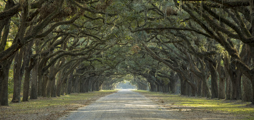 Papiers peints Forets Avenue of oaks in American South